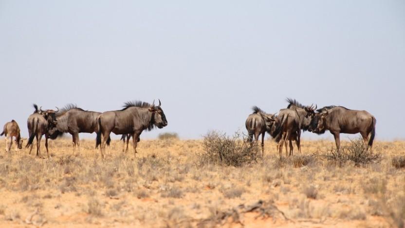 Bisher pflegt die FSF die Savannah-Plattform für GNU-Projekte, künftig könnte eine modernere Software zum Einsatz kommen.