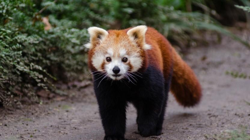 Firefox soll eine Sandbox für externe Bibliotheken bekommen.