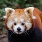 RLBox: Firefox bekommt Webassembly-Sandbox