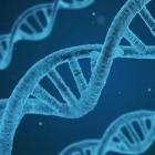 Gentechnik: Mediziner setzen Crispr-Therapie bei Sehbehindertem ein