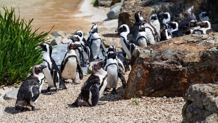 Die Linux-Werkzeuge von Systemd stehen in Version 245 bereit.
