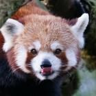 Mozilla: Firefox 74 schmeißt altes TLS raus