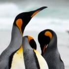 Microsoft: Windows-Updater liefert künftig Linux-Updates