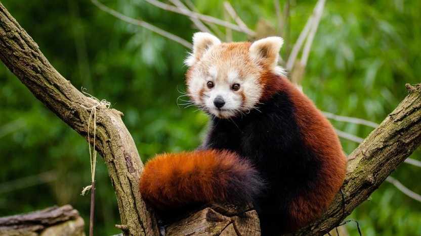 Firefox bekommt unter Linux endlich Hardwarebeschleunigung.