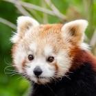 Mozilla: Firefox bekommt Hardware-Beschleunigung für Linux
