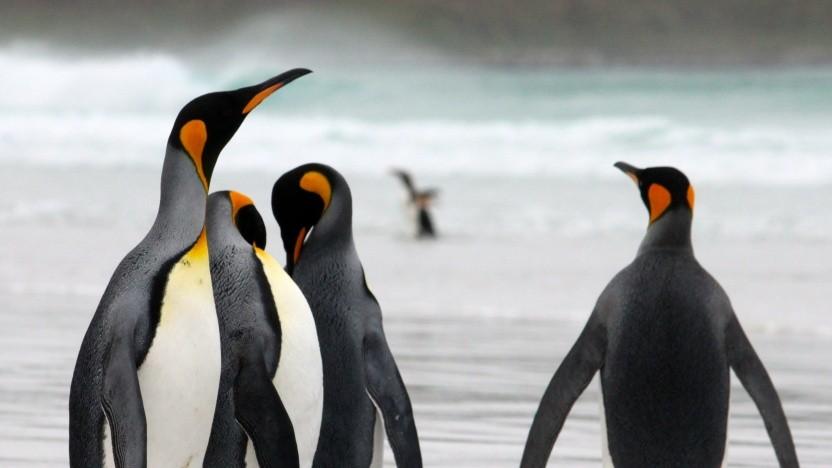 Linux 5.6 ist erschienen.