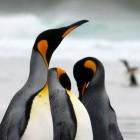VPN: Linux 5.6 macht Wireguard stabil