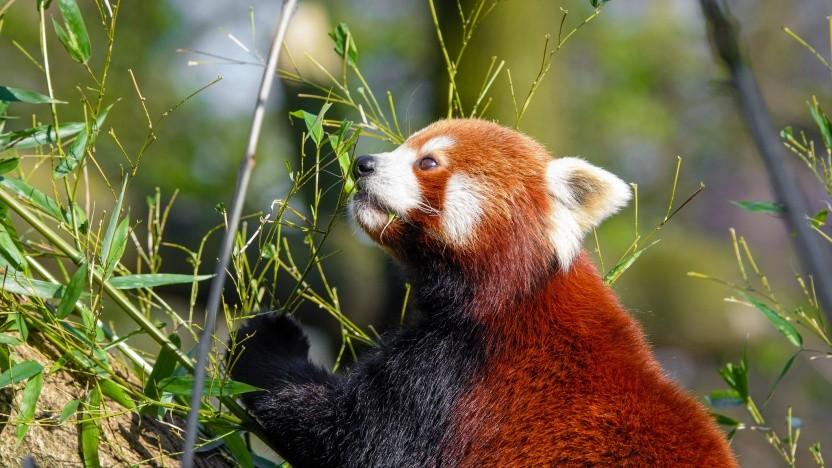 Die Firefox-Macher geben Daten zur Nutzung des Browsers frei.