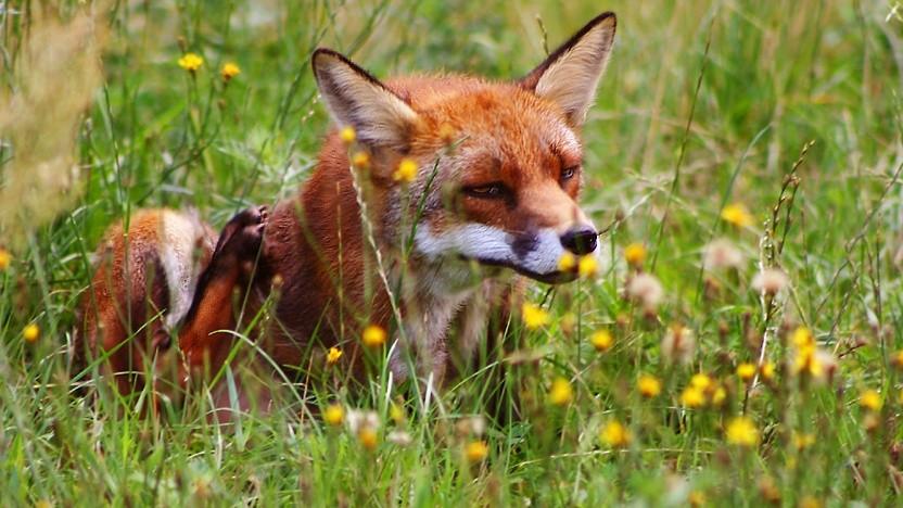Firefox-Nutzer aufgepasst: Ein wichtiges Sicherheitsupdate steht bereit.