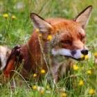Browser: Sicherheitslücke in Firefox wird bereits angegriffen