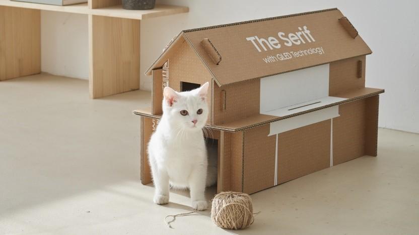 Eine Katze vor ihrem Samsung-Eigenheim