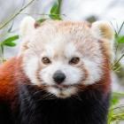 Mozilla: Firefox 75 bringt überarbeitete Adressleiste