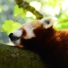 Mozilla: Firefox verschiebt FTP-Ende