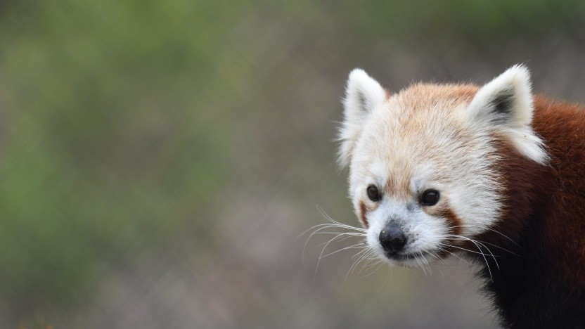 Der Firefox unterstützt nun auch WebGPU.