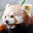 Bildcodec: Firefox-Nightly unterstützt AV1-Bildformat AVIF