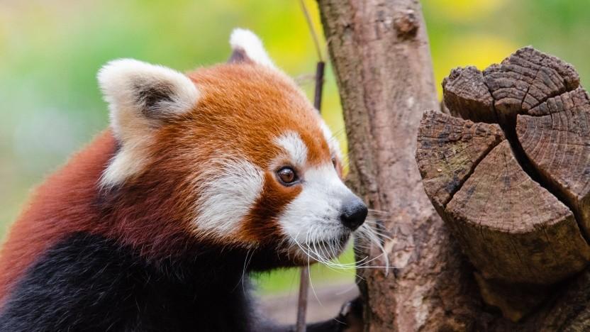 Firefox 76.0 ist verfügbar.