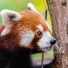Mozilla: Firefox 76 erweitert Passwortschutz