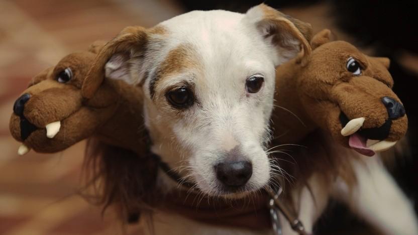 Der mehrköpfige Hund Kerberos dient als Namensgeber für das Open-Source-Projekt von Microsoft.