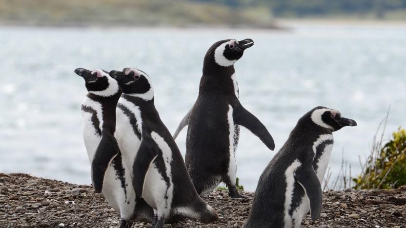 Die Interessen von Microsoft und der Linux-Kernel-Community gehen weit auseinander.