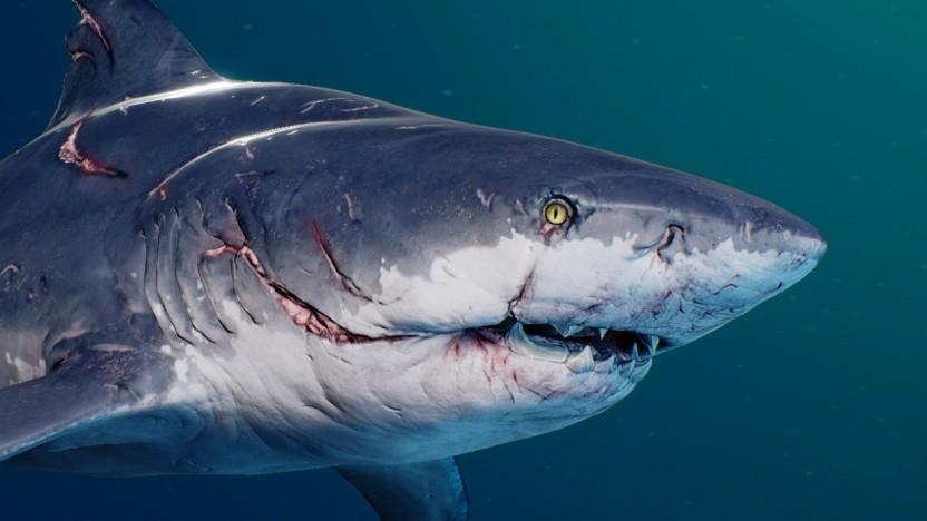 Sieht aus wie ein Weißer Hai, soll aber ein Bullenhai sein.