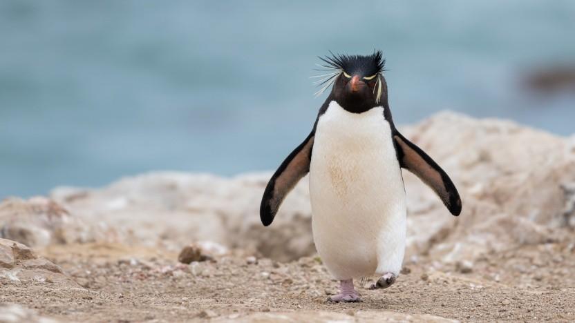 Linux 5.7 ist erschienen.