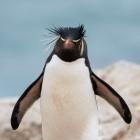 Kernel: Linux 5.7 bringt modernen Exfat-Treiber