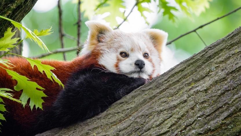 Firefox 77 ist verfügbar.