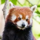 Linux: Fedora liefert Hardwarebeschleunigung im Firefox aus