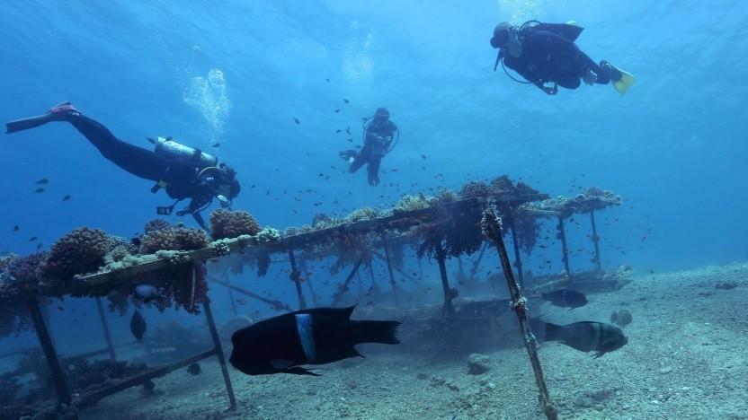 Taucher im Mittelmeer (Symbolbild): Videotelefonat unter Wasser