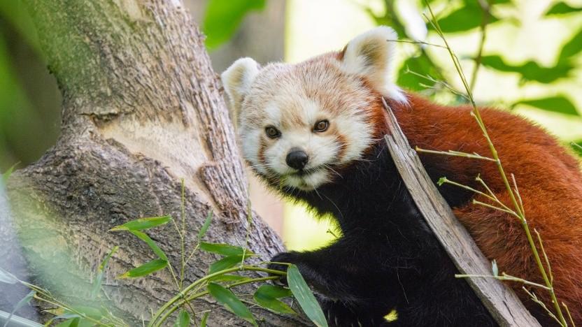 Firefox 78 ist erschienen.