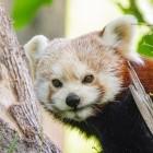 Mozilla: Firefox 78 entfernt veraltetes TLS erneut
