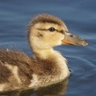 Datenschutz: Duckduckgo-Browser leakt besuchte Domains