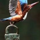 Mail-Client im Test: Thunderbirds neue PGP-Verschlüsselung ausprobiert