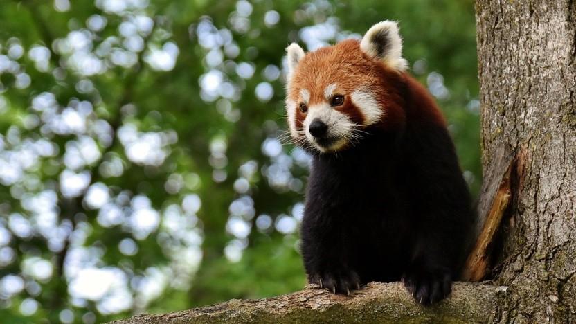 Firefox unterstützt künftig auch die Hardwarebeschleunigung unter X11.