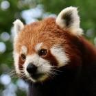 VA-API: Firefox bringt Linux-Hardwarebeschleunigung auch für X11