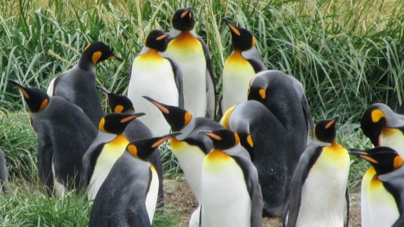 Die Kernel-Community will Rust in Linux unterstützen.