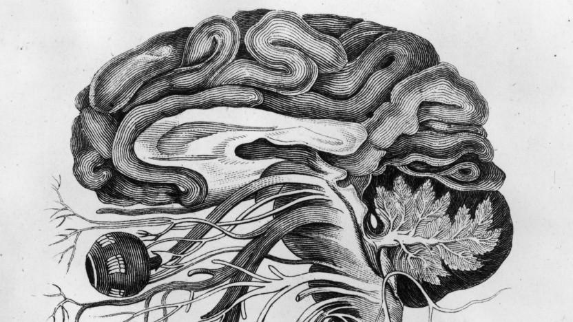 Anatomische Darstellung des Gehirns (circa 1870). Neuralink plant BCI für medizinische Zwecke und Daten-Upload.