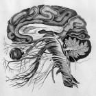 BCI: Neuralink will Musik ins Gehirn streamen