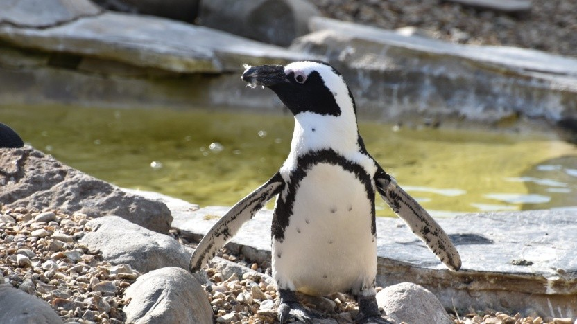 Linux könnte Support für User-Threads von Google bekommen.