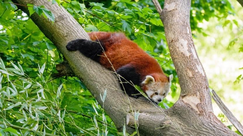 Der Firefox ist in Version 79 verfügbar.