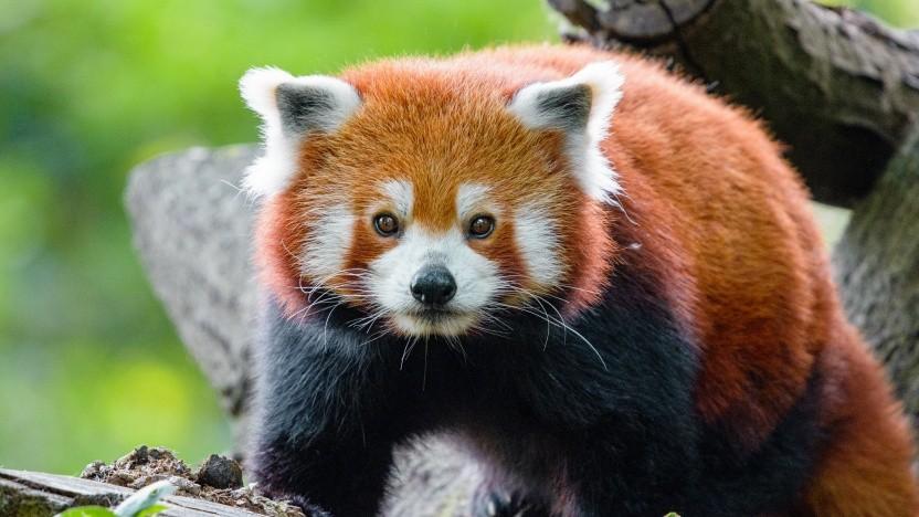 Der neue Firefox für Android wird verteilt.