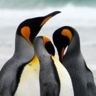 Linux: Kernel-Community will proprietäre Module stärker behindern