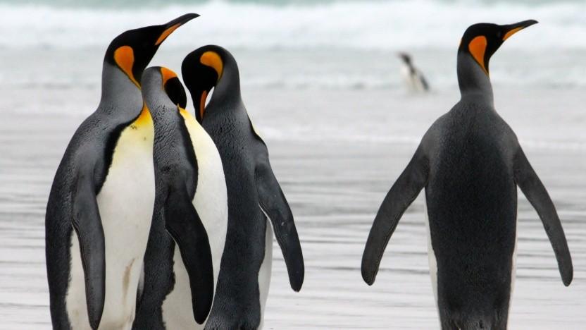 Die Lizenz des Linux-Kernel soll proprietäre Module eigentlich verhindern.