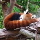 Firefox: Google ist weiterhin Standardsuchmaschine