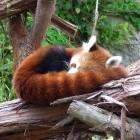 Firefox: Lauter, Leiser, Stopp und Pause per Tastendruck