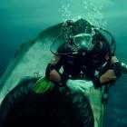 Burnout im IT-Job: Mit den Haien schwimmen