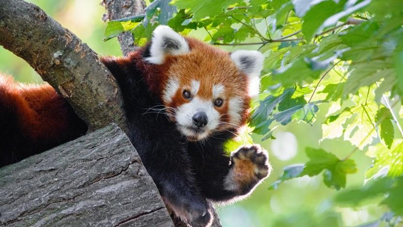 Mozilla testet neue Einkommensquellen.