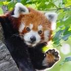 Firefox: Mozilla testet bezahlte Addon-Reviews