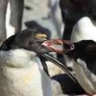Linux: Conservancy will mehr GPL-Klagen wagen