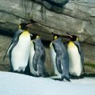 Windows 10: WSL2 soll Linux-GUIs anzeigen können